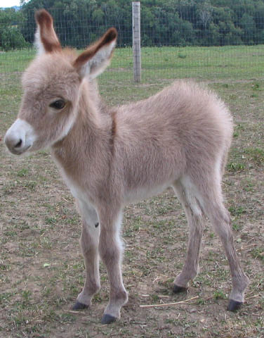 http://media.funlol.com/content/img/newborn-donkey-so-cute.jpg